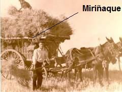 miriñaque248887-240-180