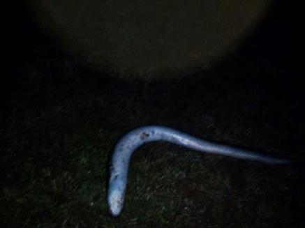 Jesus victor garcia anguila en guadiana (2)