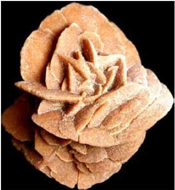 rosa del desieerto a5f20
