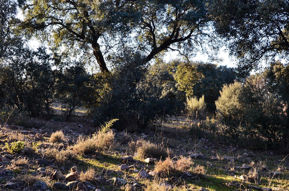ALMANAQUE NATURAL: El Encinar Manchego Occidental